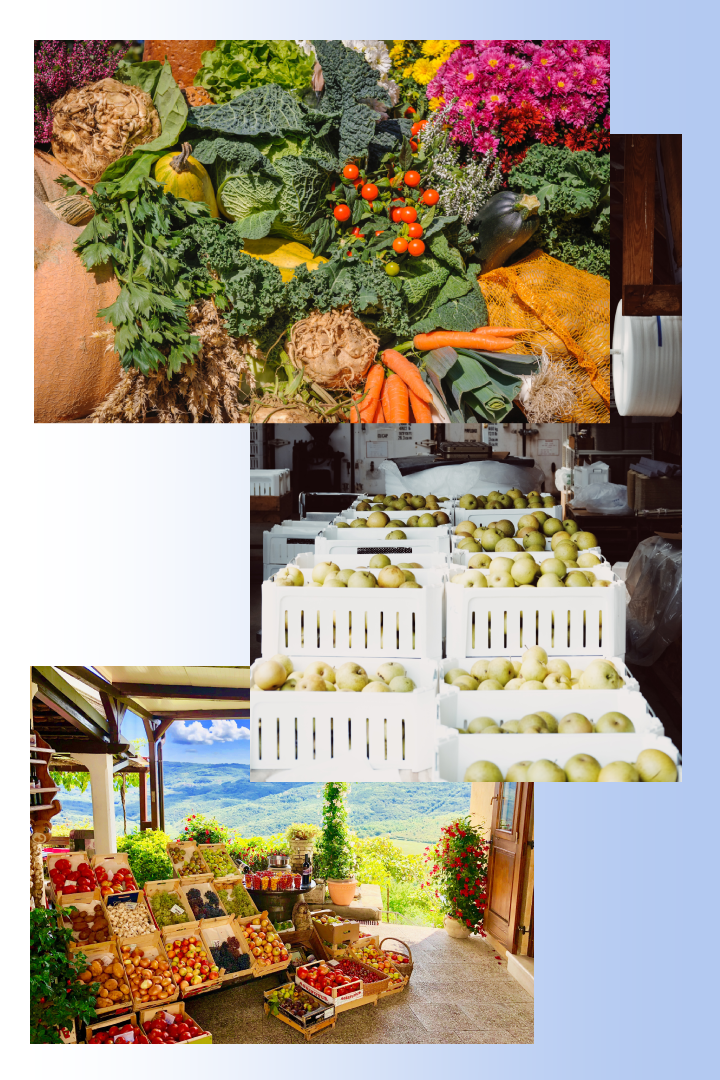 emballage levensmiddelen fruit en groente